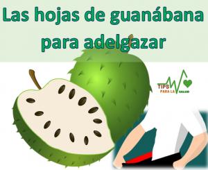 Como tomar las hojas de guanábana para adelgazar?