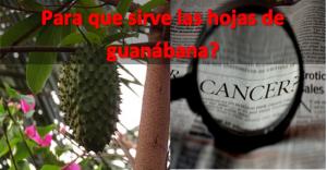 Para que sirven las hojas de guanabana hervidas?
