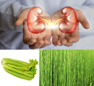 Plantas medicinales para los riñones y vias urinarias