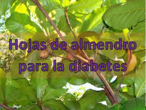 Hojas de almendro para la diabetes