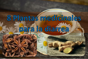8 Plantas medicinales para la diarrea y dolor de estomago