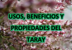 Usos, Beneficios y Propiedades del taray